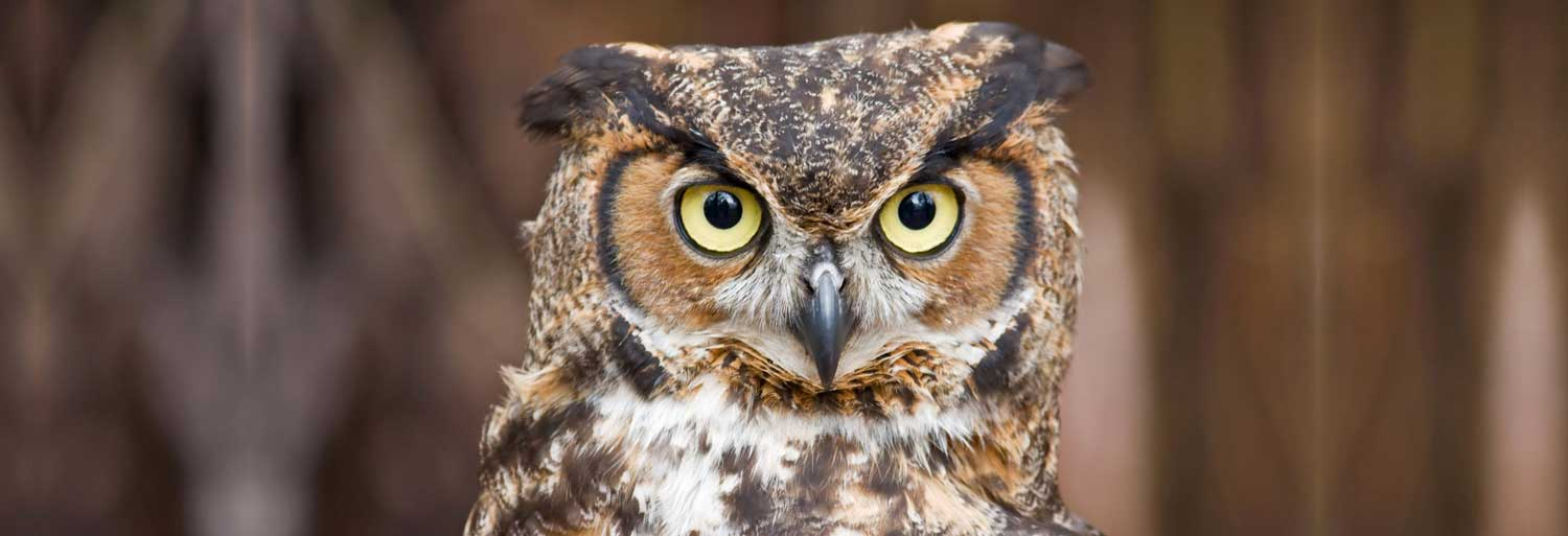 Close-up of an owl. With a link to the home page.